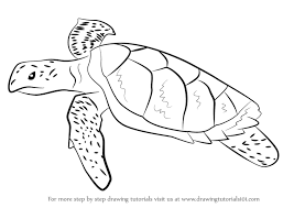 Small Picture Learn How to Draw a Hawksbill Turtle Turtles and Tortoises Step