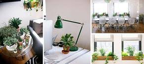 office planter boxes. 4 Benefits Of Having Plants In Your Office Space Office Planter Boxes