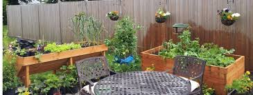 gallery of container gardening vegetables ideas