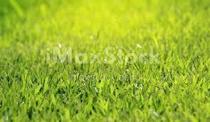 grass field background. Grass Field Background