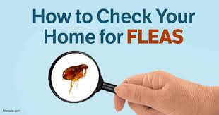 How To Kill Fleas On Furniture Plans