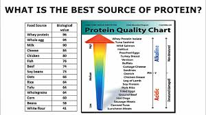 Protein Absorption Chart What Is The Best Source Of Protein From A Biological Perspective