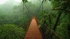 Jungle HD Wallpapers And Free ...