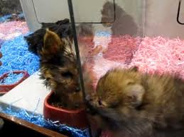 petsmart animals dogs.  Animals With Petsmart Animals Dogs F