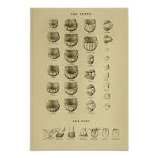 Age Of Horse By Teeth Chart Dental Anatomy Poster