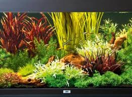 Красивое декорирование <b>аквариума пластиковыми растениями</b>