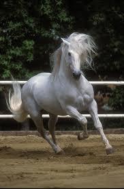 pure spanish horses equitrekking