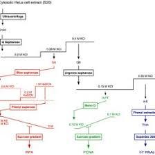 55 Recent Dna Replication Process Flow Chart 189174624295 Dna