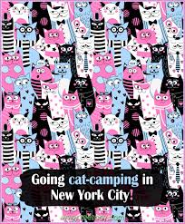 Packing my Gear and Going Cat-Camping in New York City!