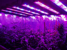 Amazon Led Grow Light Reviews Best Led Grow Lights For Weed On Amazon