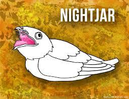 s that start with n nightjar ilration