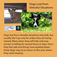 Lost Pet Flyer Maker Did Your Dog Get Scared By Fireworks Don't Panic Lost Dogs of 26