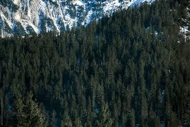 Winter Forest Background By Sonja Lekovic Stocksy United