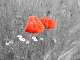 Znalezione obrazy dla zapytania poppies and cornflowers black and white