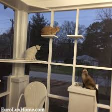 Evening on the Cat Porch