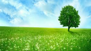 green grass field animated. FHDQ PC (Win10) Tree Green Fields Pictures: Wallpapers-Web Graphics Grass Field Animated