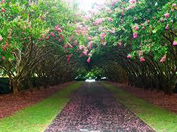 dallas arboretum botanical dens summer the den blooms and