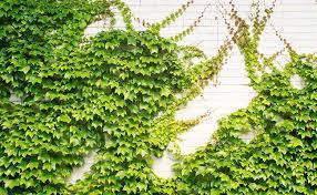 Creating A Lattice Trellis Garden At Your HomeClimbing Plant Trellis