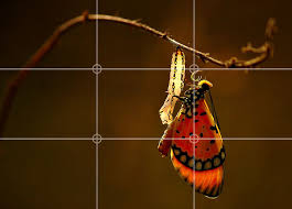rule of thirds photography. Butterfly Hanging From A Twig Rule Of Thirds Photography