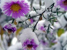 Лучших изображений доски «цветы»: 47 | Planting Flowers ...