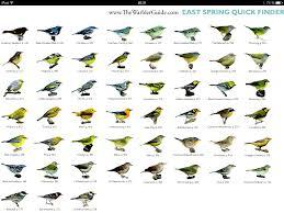 Warbler Id Chart Spring Warblers East Birds Bird Identification