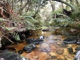 best forest trails in garden route