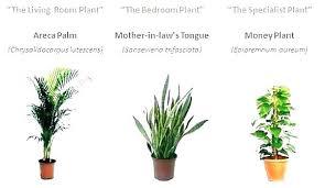 low maintenance office plants. Best Indoor Plants Low Light Grow Bulbs For Maintenance Office Fluorescent Li .