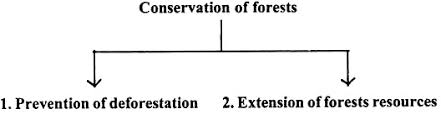 essay on the conservation of forest in  conservation of forests