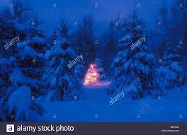 Christmas Tree Lighting Anchorage Christmas Tree With Colored Lights Anchorage Sc Alaska