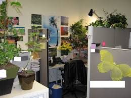 office cubicle plants. Image Of: Cubicle Plants Decoration Office