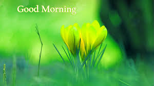 Flowers Top Good Morning Images Photo Pictures Wallpaper