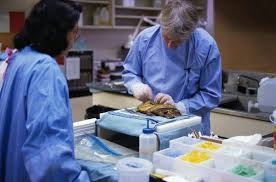 forensic pathologist what courses do you have to take to be a forensic pathologist