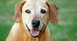 Image result for old dog