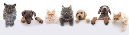 pet insurance plus health insurance france
