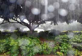it can rain in hawaii but that doesn t mean that you should write