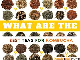 what is the best tea for brewing kombucha