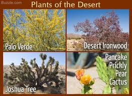 desert plants with names. Wonderful Names Desert Plants Names List  Photo11 In Plants With Names