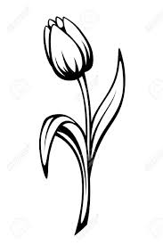 Vector Zwarte Contour Van Een Tulp Bloem Geïsoleerd Op Een Witte