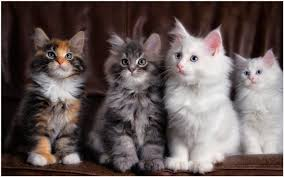 cute cats wallpapers free download. Contemporary Wallpapers Cute Cats Wallpaper  Cute Cats Wallpaper Free Download  Wallpapers Wallpapers Android  Intended Wallpapers Free Download