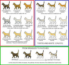 Tortie And Calico Chart Cat Colors Siamese Cats Types Of