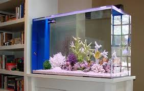 Fish Tanks to Have at Home