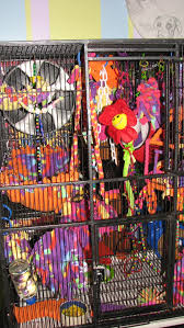 this is my s cage full of toys