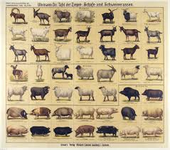 Goat Chart Breeds Of Different Animals On Amazing Charts Sheep Breeds
