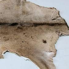deer skin rug white tailed deer hide rug deer skin rug uk deer skin rug
