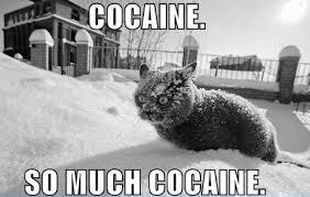 Finniest-Snow-Memes-Ever8.jpg via Relatably.com