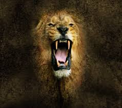 ultra hd angry lions 4k images 960x854 px