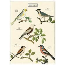 Wrap Oiseaux Bird Chart