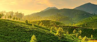 Exclusive Travel Tips for Your Destination Munnar in South India