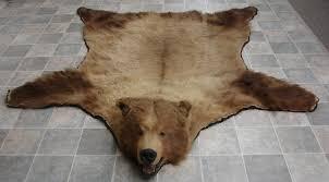 massive coastal kodiak bear rug used