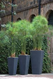 great idea for plants on a patio privacy and shade in